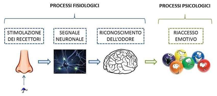 Processi fisiologici e psicologici