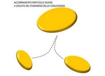 Accorpamento delle particelle oleose nel processo di coalescenza