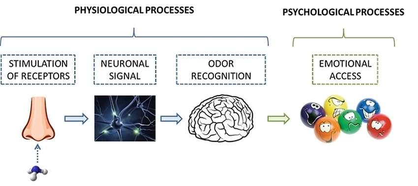 Physiological and psychological processes